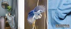 蓝天豚188色卡艺术色系搭配,优雅灰蓝超凡气质成今冬时尚宠儿